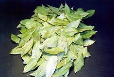 Aromatical & Medicinal Herb