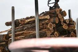 Logs & Pulp