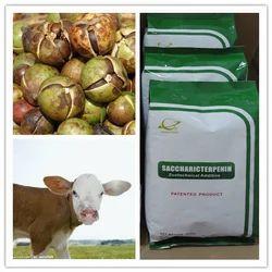 Cattle Phytogenic Feed Additives-saccharicterpenin