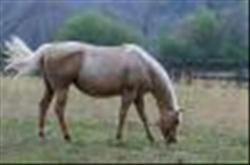 Grass Seed Pony Paddock