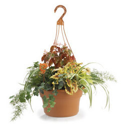 Decorative Pots/Panterra Hanging Pots