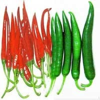 Fresh Green Vegetable - Fresh Chillies